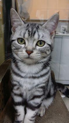 고양이 하나 | Daum 루리웹