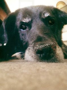 OLD dogs are the best dogs.