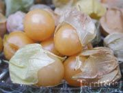 Territorial Seed  Pineapple Ground CherryOrganic