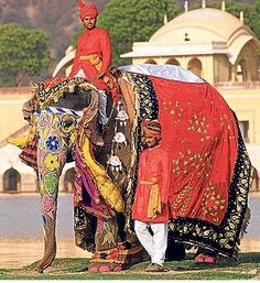 Elephants and Rajasthan, India.