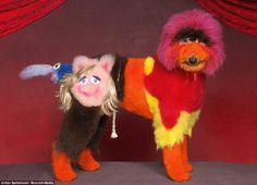 If Bernhard Willhem did dog grooming