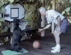 Dog playing basketball 汪汪狗打籃球 – ☆討論區 Forum 歐北貢論壇 – 行動網路電視台