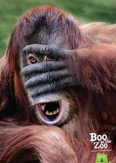 Zoos SA: Boo at the zoo - orangutan Advertising Agency: Showpony Advertising, Adelaide / Melbourne, Australia Creative Director: Parris Mesidis Art Directors: Nic Maumill, Jonathan Pagano Copywriter: Nic Maumill Retouching: Paul Munzberg Published: October 2015