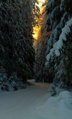bluepueblo: Winter Spruce Road, Finland photo via andr Winter Pictures, Nature Pictures, Winter Photography, Nature Photography, Travel Photography, Terre Nature, Winter Magic, Winter Scenery, Nature Aesthetic