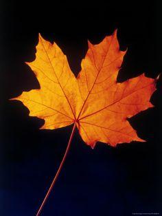 ~ Autumn Leaf