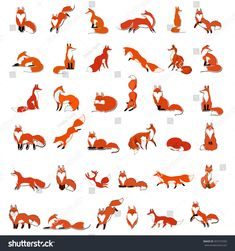 Big vector set red Foxes in different poses, isolated on white Fox Drawing, Drawing Sketches, Fox Anatomy, Animal Drawings, Art Drawings, Art Fox, Logo Animal, Fuchs Illustration, Fuchs Tattoo