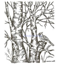 Bird Cardinal on Birch Wood Mounted Rubber Stamp Northwoods Rubber Stamp New