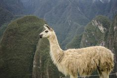 Fascinating Machu Picchu