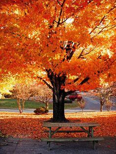 Fall in Hiawassee, Ga