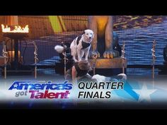 "Dog trainer Sara Carson took the America's Got Talent stage once again with her adorable Border Collies ""Hero"" and ""Loki"" to perform all sorts of incredible tricks to Bonnie Tyler's song ""Holding Out for a Hero."" A post shared by America's Got Talent - AGT (@agt) on Aug 29, 2017 at 6:37pm"
