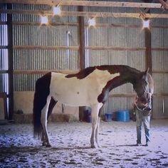 Spellbound horses blog