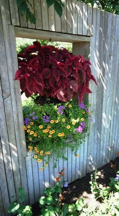 "Go Vertical - clever use of ""window"" in a fence for plants"