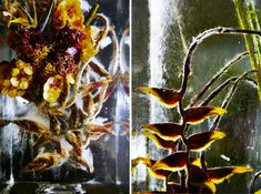 azuma makoto iced flowers exhibition sets plants in an inorganic space