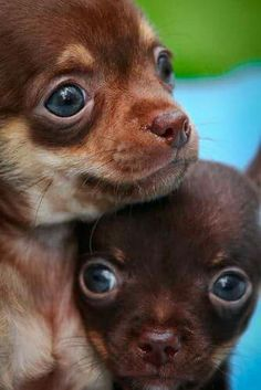 Two Sweet Chi