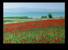 Spring in Beysehir