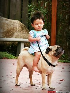 All horses should look like pugs.... Or we should make giant pugs and ride them like horses/