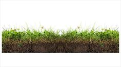 grass section - Google Search