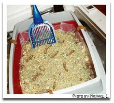 the kitty litter cake!