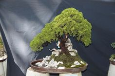 Bonsai Bonsai Garden, Bonsai Trees, Zen Gardens, Small Gardens, Miniature Trees, Growing Tree, Ikebana, Container Gardening, Badass