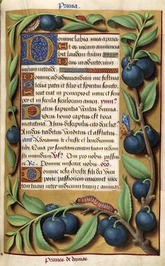 Border decorated with plum tree branches and inhabited by beetle and caterpillars | Book of Hours | France, Tours | ca. 1515 | The Morgan Library & Museum