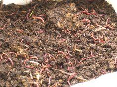Cómo hacer un criadero de lombrices composteras: la mejor manera de crear tierra para sembrar