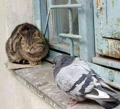 a kitty and a pigeon, both puffed up.