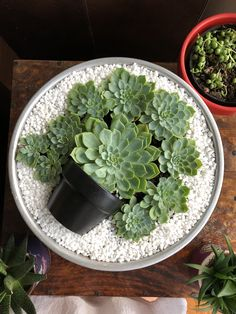 Deco Trend: Small Colorful DIY Succulent Plant Pot in Top .- Deko-Trend: Kleiner bunter DIY-Sukkulenten-Blumentopf im Topf Deco Trend: Small Colorful DIY Succulent Plant Pot in Pot Cacti And Succulents, Planting Succulents, Planting Flowers, Cactus Plants, Propagate Succulents, Succulents In Containers, Succulent Gardening, Garden Pots, Organic Gardening