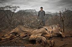 18 fotó arról, hogy mekkora veszélyben vagyunk | CivilHír