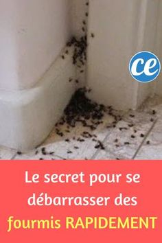 The secret to getting rid of ants quickly.
