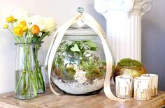 Colonial House Forest Heights Greens Terrarium from Colonial House of Flowers. Bubble Bowl + Vases by @syndicatesales / votives @potterybarn
