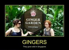 GINGERS - Demotivational Posters to Demotivate You - Work Harder, Not Smarter. Funny People Pictures, Funny Photos, Ginger Humor, Very Demotivational, Natural Phenomena, Pretty Cool, Cool Words, Habitats, Singapore
