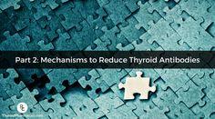 Thyroid Antibodies Part 2: Mechanisms to Reduce Thyroid Antibodies
