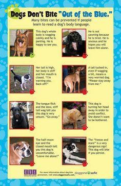 Dog's Body Language - Don't Get Bitten ~ https://fbcdn-sphotos-g-a.akamaihd.net/hphotos-ak-ash4/1000137_333531156780394_1447552708_n.jpg