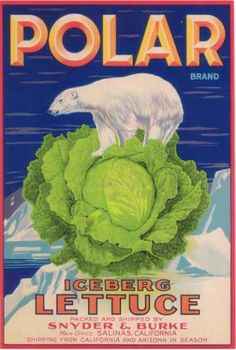 http://scout901.hubpages.com/hub/cross-stitch-pattern-Polar-lettuce