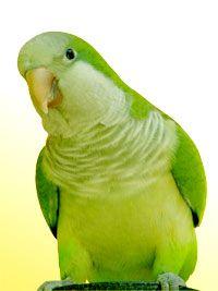 5 Ways To Rev Up Your Bird's Vocabulary