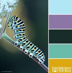 Caterpillar #patternpod #patternpodcolor #color