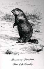 Groundhog Day Postcards Antique Shoppe Archives