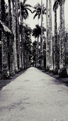 Jardim Botânico, RJ/BR