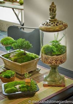 Moss! Already have one planter with moss. Gonna get some more like these