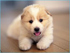 Ten Moments To Remember From Dog Wallpaper Download   Dog Wallpaper Download