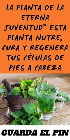 """""""The Eternal Youth Plant"""" This Plant Nourishes, Heals and Regenerates Your Cé … - All About Health Eternal Youth, Even Skin Tone, Gout, Healthy Juices, Just Do It, Health Remedies, Body Care, Dental, Medicine"""