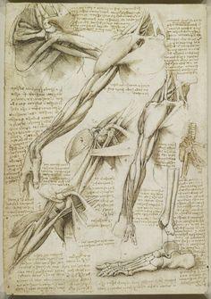 leonardo da vinci disegni - anatomia
