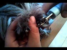 Cortar uñas negras a un perro - YouTube