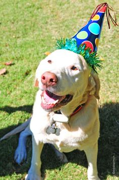 Birthday party for a pet