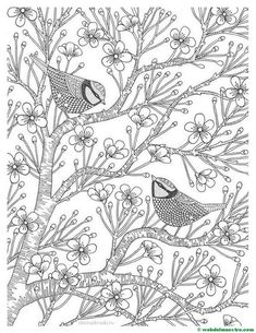 Coloring Pages For Adults Love Birds Spring Flowers Blossoming