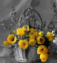 Basket of flowers with color splash.