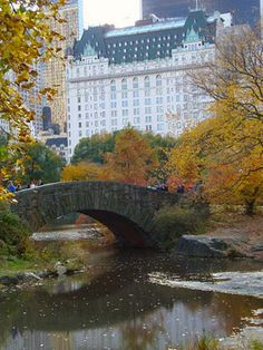 Regulars At Plaza Hotel Nyc Overlooking Central Park
