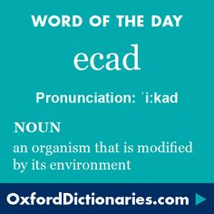 ecad (noun): an organism that is modified by its environment. Word of the Day for 31 August 2016. #WOTD #WordoftheDay #ecad