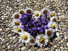 Kraut, Garden, Plants, Fitness, Children Stories, Violets, Dried Flowers, Stories For Children, Marriage Anniversary