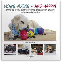 Separation anxiety an issue for your dog?